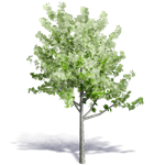 generic summer tree 5