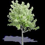 arbre generique ete 2