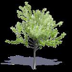 arbre generique ete 9