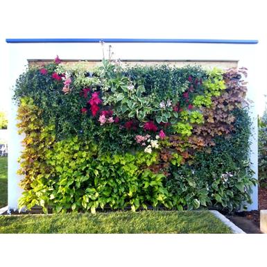 mur végétal à godets