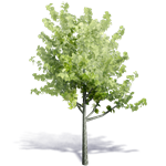 arbre generique ete 10