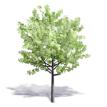 arbre generique ete 8