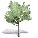 generic summer tree 10