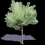 arbre generique ete 7