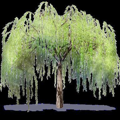 Weidebaum