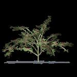 akazien-retinoden
