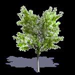 arbre generique ete 6