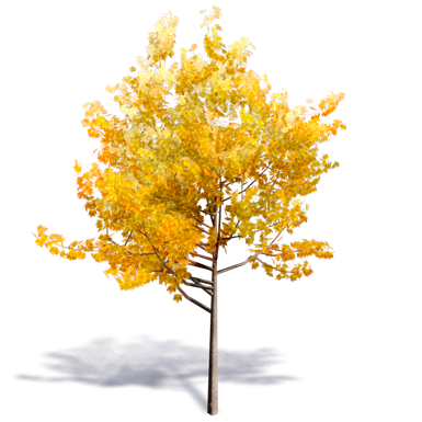 Generic Autumn Tree 1