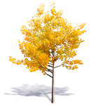 generischer herbstbaum 1