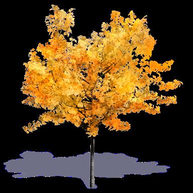 Generischer Herbstbaum 2