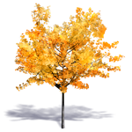 generic autumn tree 2
