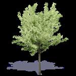 arbre generique ete 12