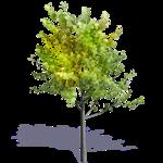 generic summer tree 8