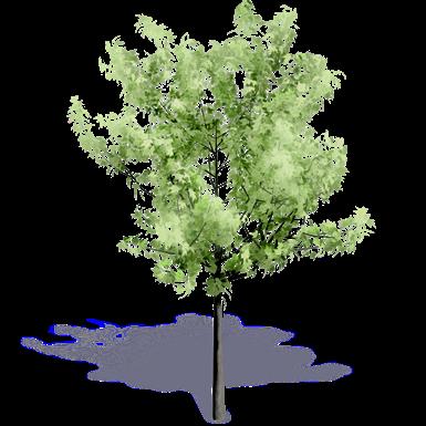 Generic Summer Tree 1