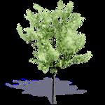 arbre generique ete 1
