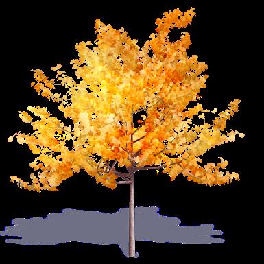 generischer herbstbaum 3