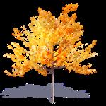 arbre generique automne 7