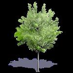 generic summer tree 7