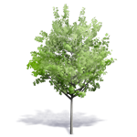 arbre generique ete 4