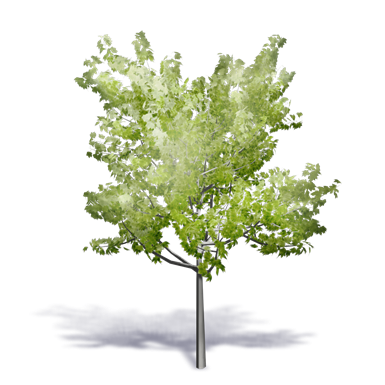 generic summer tree 3