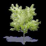 arbre generique ete 11