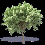 kastanienbaum 3