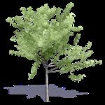 arbre generique ete 3