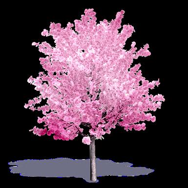 Cherry Tree In Bloom Plants Free Bim Object For Cinema 4d Revit Sketchup Rhinoceros 3ds Max Ifc 3ds Max Bimobject
