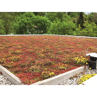 CITYFLOR®, GREEN ROOF SYSTEM (Axter) | Free BIM object for